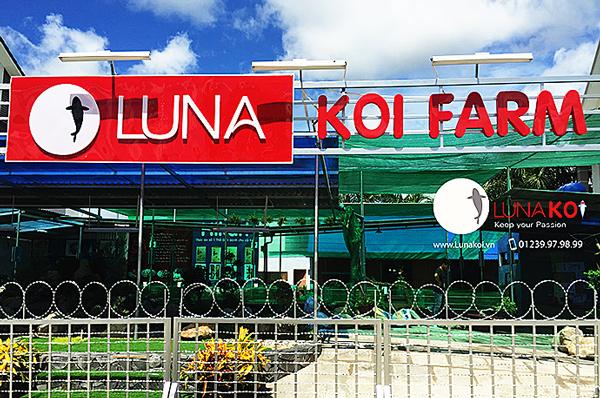 Cá chép Koi Luna - Cá chép Cần Thơ