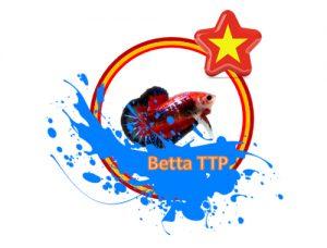 Betta Cần thơ - Niềm đam mê của giới trẻ