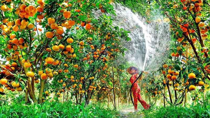 Trái cây đặc sản tại Cần Thơ