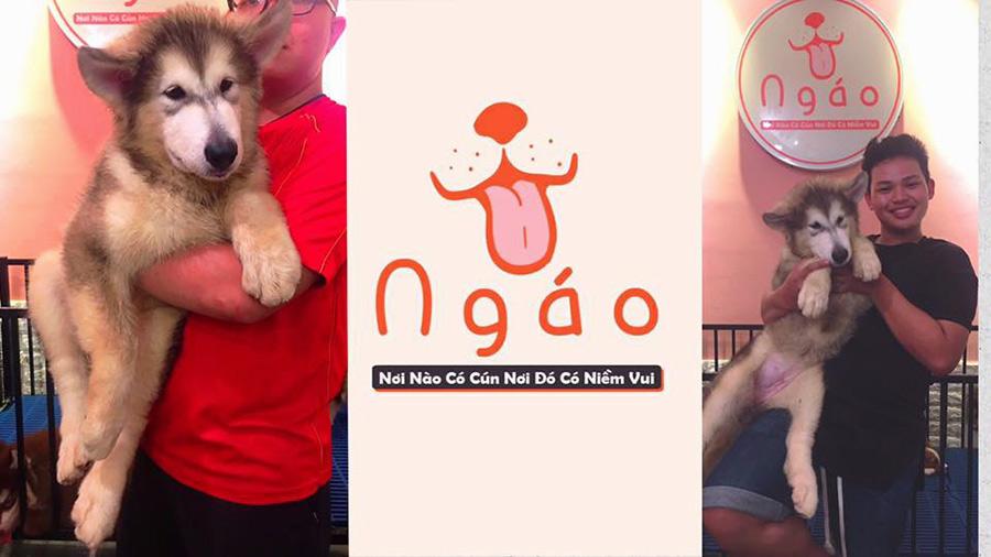 Ngáo - Pet Coffe Shop