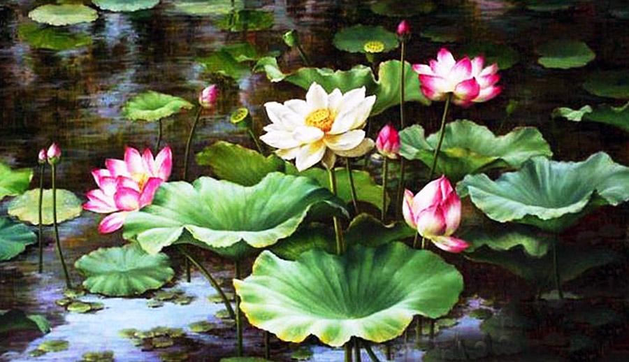 Hoa sen tĩnh tại - Tranh kính Phong Thủy