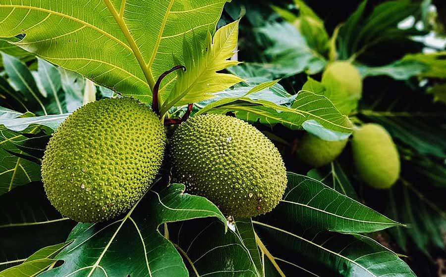 Mùa cây rộ trái cũng mùa Lễ Vu Lan